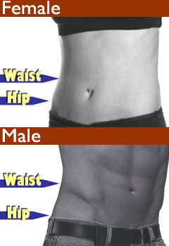 The Waist-hip ratio or waist-to-hip ratio (WHR) is the dimensionless ratio of the circumference of the waist to that of the hips. This is calculated as waist measurement divided by hip measurement (W ÷ H). For example, a person with a 30″ (76 cm) waist and 38″ (97 cm) hips has a waist-hip ratio of about